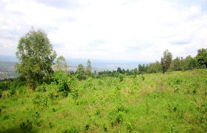 rebero land sale (2)